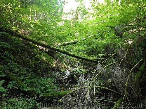 倒木だらけの狭い狼谷