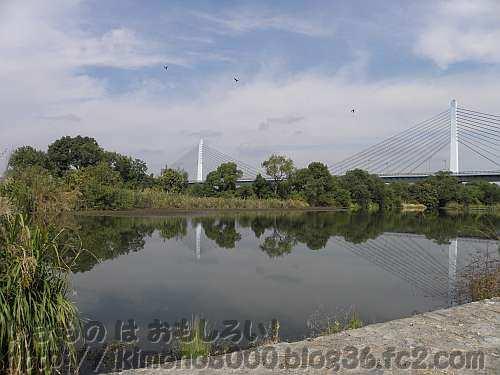 人工的に作られた河原も時間がたてばビオトープの淀川のわんど