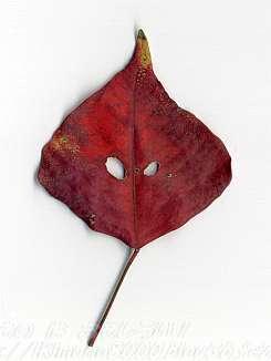 宇宙人のようなナンキンハゼの葉