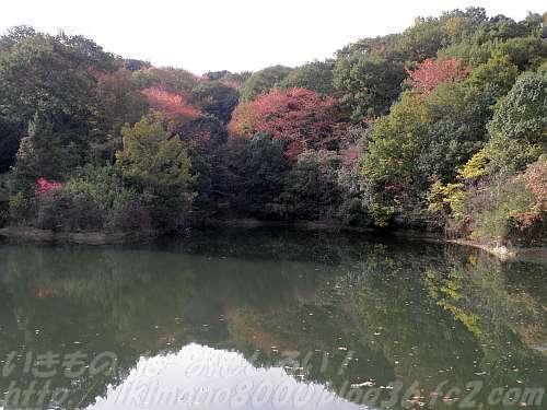 きつつきの森の堤池