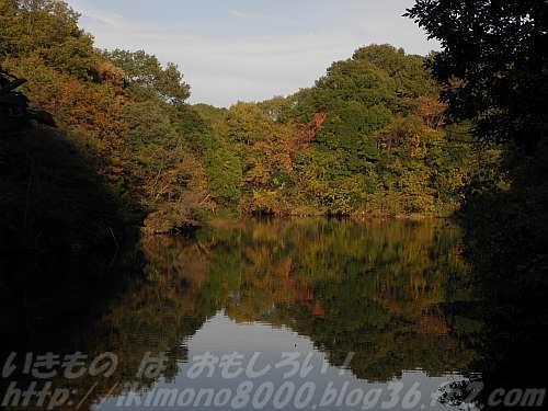 池畔の径から見た奥の池