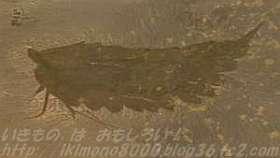 初期の節足動物レアンチョイリア