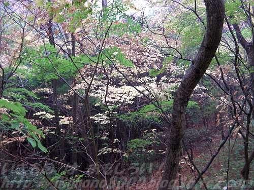 まだ葉が落ちきっていない初冬の和泉葛城山