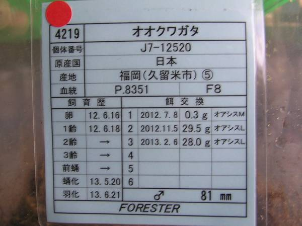 フォレスタ久留米81.0mm③