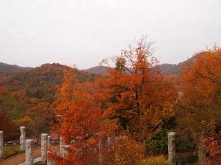 有馬富士公園紅葉の木々