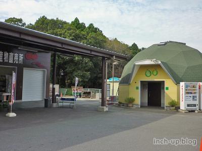 sungreenasahi002.jpg