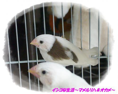 P1100526_convert_20140130072546.jpg