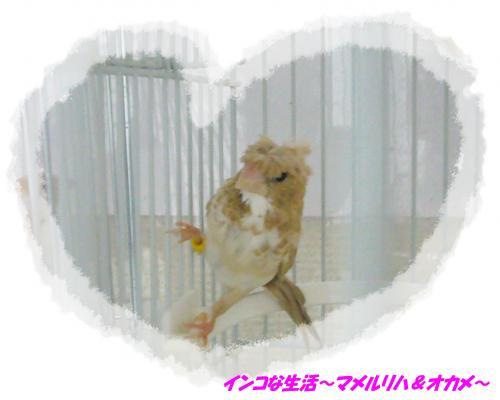 P1110002_convert_20140206170620.jpg