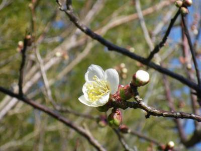 この春一番最初の花