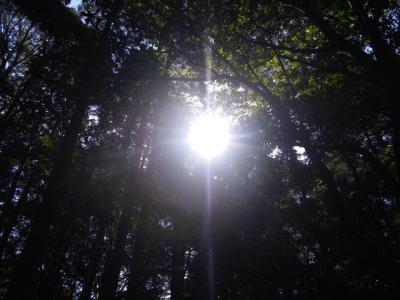 森の中にある太陽