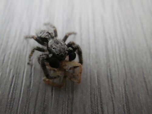 2013-5-17蜘蛛