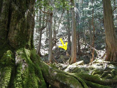 イチイの森