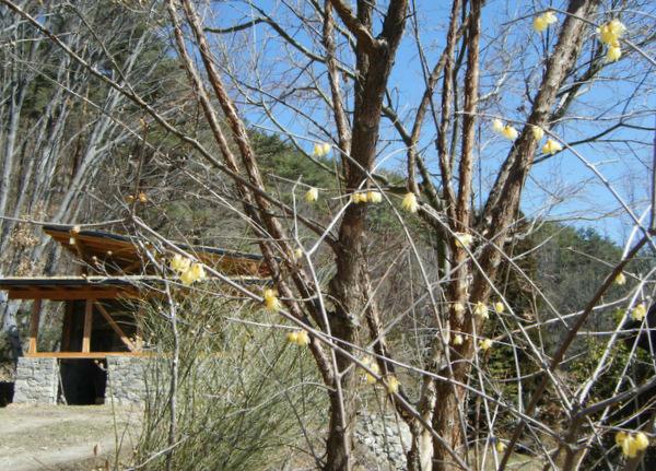 アプローチから草屋根の石積みの家を臨む