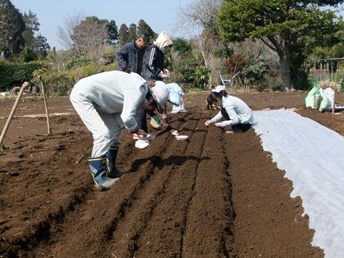 2013.3.15 ファーマーズ女子会(本田宅) 014 (11)