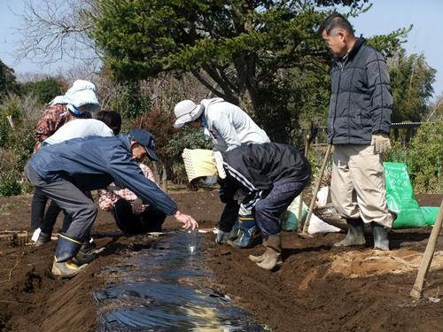 2013.3.15 ファーマーズ女子会(本田宅) 014 (6)