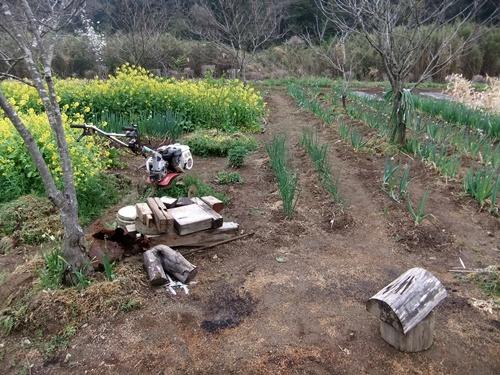 2013.4.1 春の野菜畑(伊藤農園) 014
