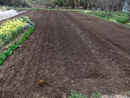 2013.4.1 春の野菜畑(伊藤農園) 011