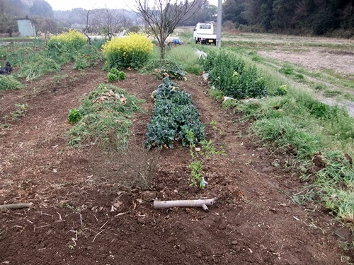 2013.4.1 春の野菜畑(伊藤農園) 030