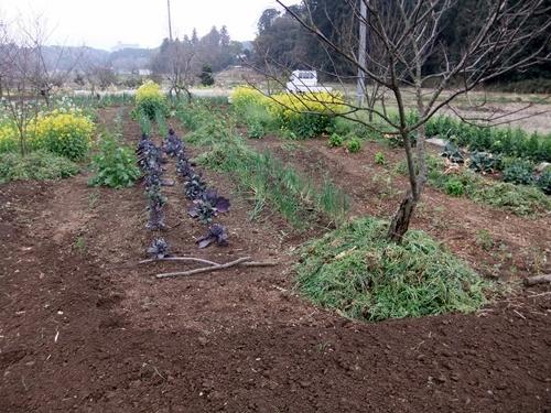 2013.4.1 春の野菜畑(伊藤農園) 029