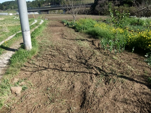 2013.4.8 耕作後の畑(伊藤農園) 004 (1)