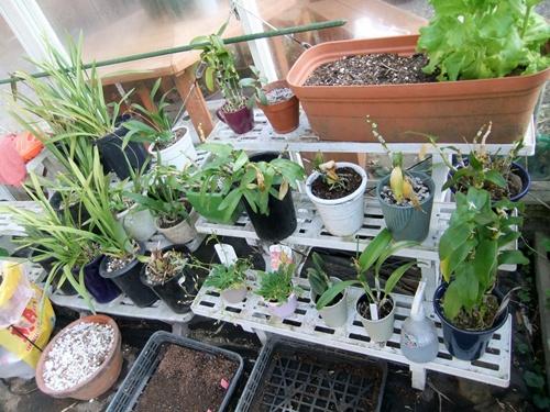 2013.4.12 多肉植物(伊藤農園) 047 (1)