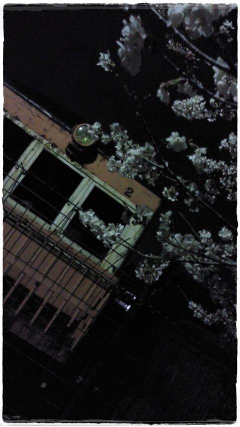 sakura.jpg