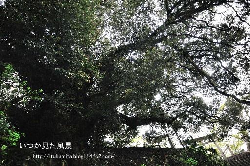 D3C_8550ri-ss.jpg