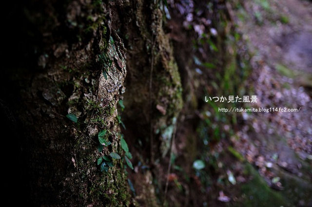 DS7_4877ri-s.jpg