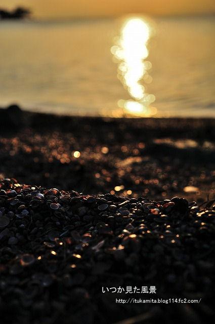 宍道湖のシジミ