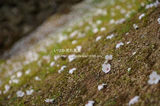 DS7_7346ri-s.jpg