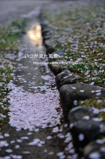 DS7_7586ri-ss.jpg