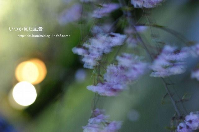 DS7_7764ri-s.jpg