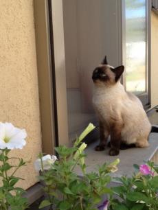 猫130918-1_convert_20130918144608
