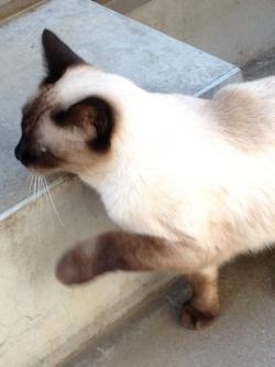猫130918