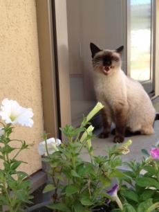 猫130918-3_convert_20130918145108