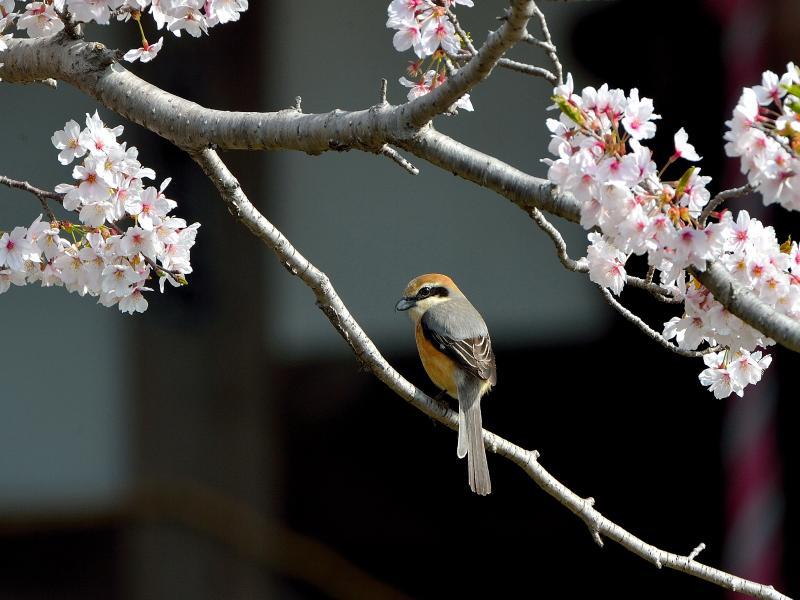 I○○………公園の百舌鳥