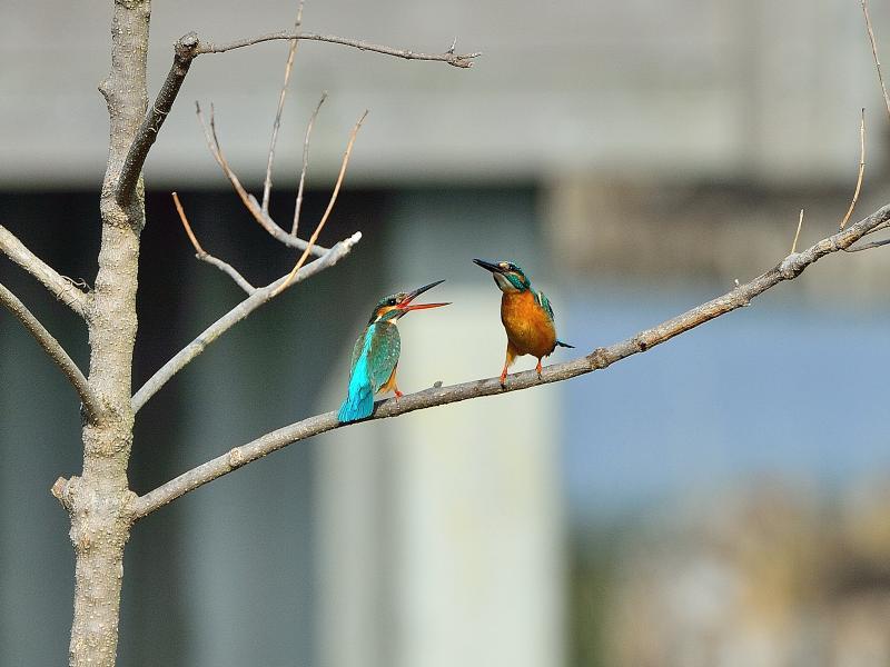 k○○○公園の小鳥