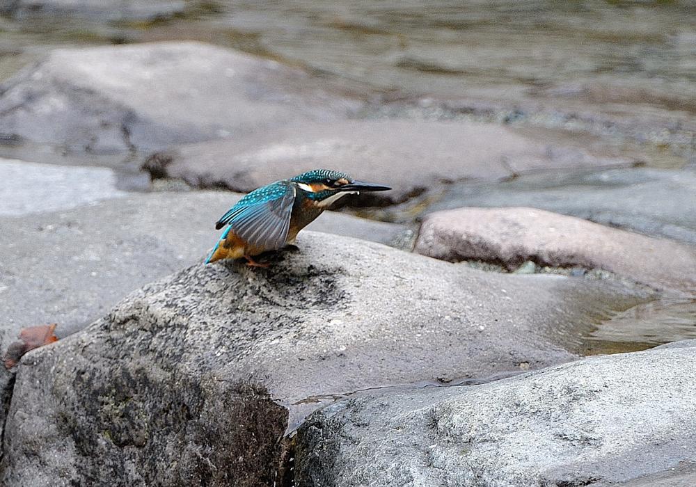 ○○Kの小鳥