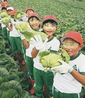 キャベツ 畑で子供