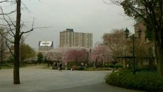 桜 浜町公園