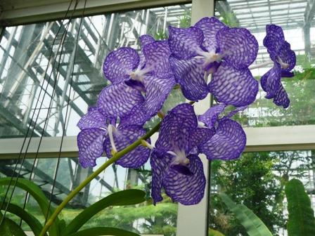 筑波実験植物園 温室 ?