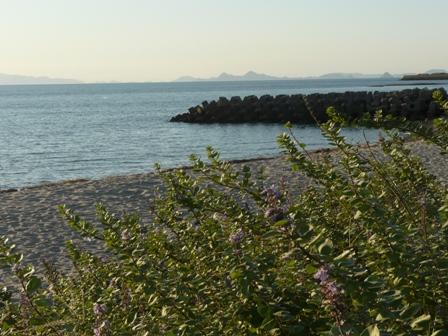 塩屋海岸 ハマゴウ 1