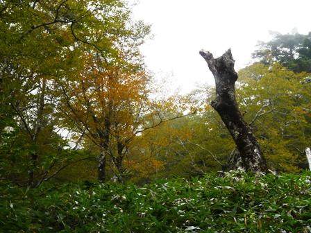 瓶ヶ森林道 少し紅葉 2
