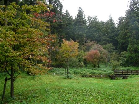 皿ヶ嶺登山口・風穴周辺 少し紅葉 2
