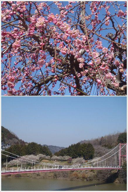 2013-03-16 月ヶ瀬梅林