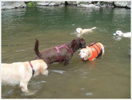 ラブは泳ぎ大好き♪