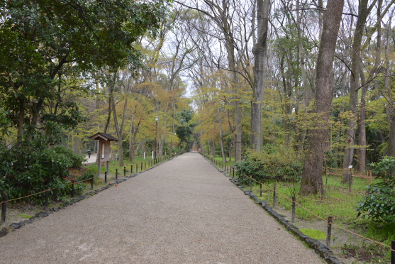 糺すの森の新緑