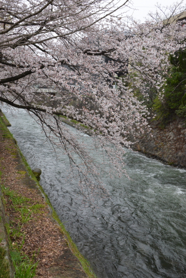 琵琶湖疏水②