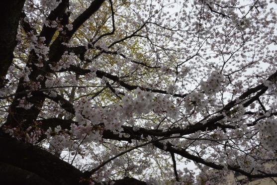 琵琶湖疏水③
