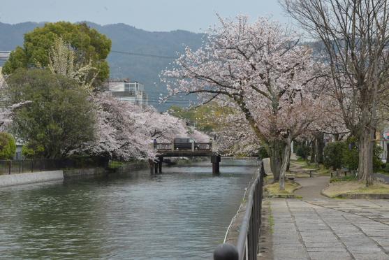 琵琶湖疏水④